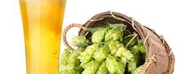 I polifenoli della birra proteggono il cuore